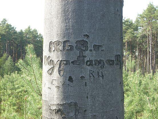 napis-na-strome-kolny